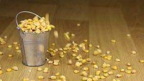 Caia em uma cubeta de grões do milho e no assoalho de madeira filme