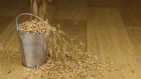 Caia em uma cubeta de grões do trigo e no assoalho de madeira vídeos de arquivo