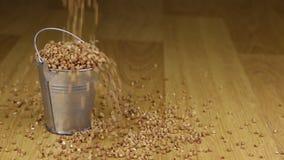 Caia em uma cubeta de grões do trigo mourisco e no assoalho de madeira vídeos de arquivo