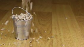 Caia em uma cubeta de sementes de girassol e no assoalho de madeira video estoque