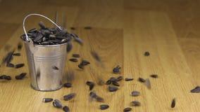 Caia em uma cubeta de sementes de girassol e no assoalho de madeira filme