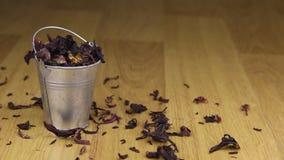 Caia em uma cubeta do hibiscus e no assoalho de madeira filme