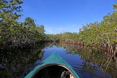 Caiaque nos manguezais fotografia de stock