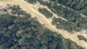 Caiga abajo la vista de la cama de río que corre a través de un bosque Foto de archivo libre de regalías