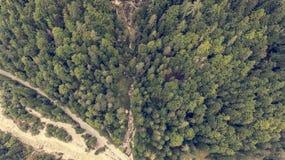 Caiga abajo la vista de la cama de río que corre a través de un bosque Foto de archivo