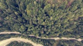 Caiga abajo la vista de la cama de río que corre a través de un bosque Fotos de archivo