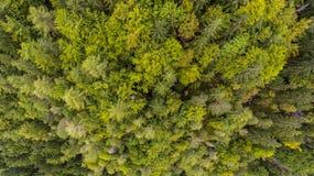 Caiga abajo la vista de los tops del árbol Imagen de archivo