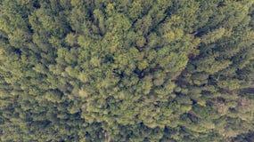 Caiga abajo la vista de los tops del árbol Fotos de archivo libres de regalías