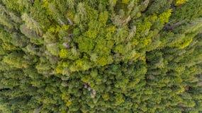 Caiga abajo la vista de los tops del árbol Fotografía de archivo