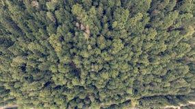 Caiga abajo la vista de los tops del árbol Imagen de archivo libre de regalías