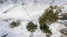 Caiga abajo la vista del camino que pasa a través de bosque del invierno Imagen de archivo libre de regalías