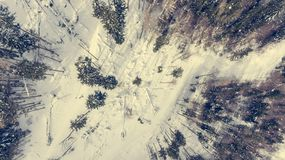 Caiga abajo la vista del camino que pasa a través de bosque del invierno Fotos de archivo