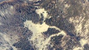 Caiga abajo la vista del camino que pasa a través de bosque del invierno Fotografía de archivo