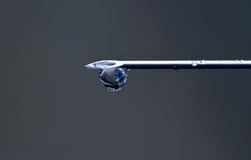 Caiga el colgante en la extremidad de la aguja médica Imagen de archivo