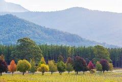 Caiga en los árboles verdes, amarillos, rojos, y anaranjados de Australia - Fotos de archivo