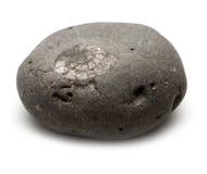 Caillou gris avec l'ammonite incorporée Photos stock
