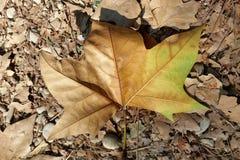 Cailloux et feuilles Photographie stock libre de droits