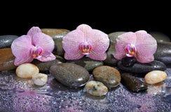 Cailloux et orchidées roses Photo libre de droits