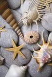 Cailloux et Seashells attrayants photographie stock libre de droits