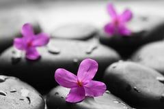 Cailloux humides noirs avec des fleurs Image stock