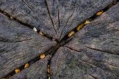 Cailloux incorporés dans un brise-lames Images libres de droits