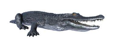Caiman аллигатора перевода 3D на белизне иллюстрация вектора