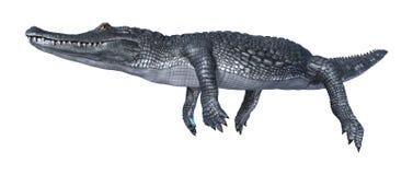 Caiman аллигатора перевода 3D на белизне бесплатная иллюстрация