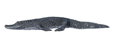 Caiman. 3D digital render of an alligator caiman isolated on white background stock photo