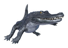 Caiman Stock Photos