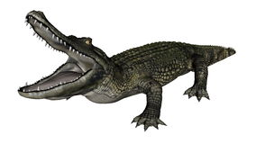 Caiman roaring - 3D render Royalty Free Stock Photography