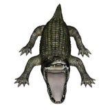 Caiman roaring - 3D render Royalty Free Stock Images
