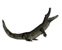 Caiman roaring up - 3D render Royalty Free Stock Photography