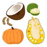 Caimito, coco, abóbora, Tamarindus indica, Jackfruit - ilustração Ilustração Royalty Free