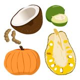Caimito, Coconut, Pumpkin, Tamarindus indica, Jackfruit - Illustration Stock Images