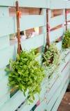 Cair das plantas verdes. Fotografia de Stock Royalty Free