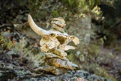 Cairn facendo uso di un cranio per segnare traccia in Corsica Immagini Stock