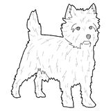 Cairn Terrier. Animal Cartoon Art Royalty Free Stock Images