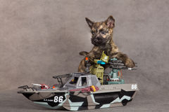Cairn terrier dog Stock Photos
