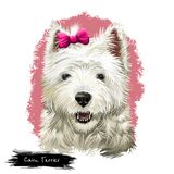 Cairn Terrier dog breed isolated on white digital art illustration. Old terrier breeds, originating in the Scottish. Highlands, working dogs. Cairn function was stock photography