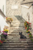 Cairn Terrier sitting at old staircase in Szentendre Stock Image