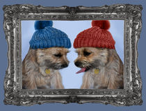 Cairn terrier twins Stock Images