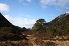 Cairngorms Royalty Free Stock Photo
