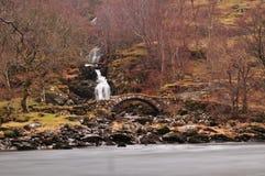 Cairngorms ljung som kväv skoggolvet royaltyfria bilder
