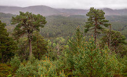 Cairngorms National Park Royalty Free Stock Image