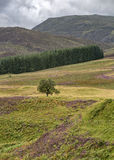 Cairngorms Royalty Free Stock Photography