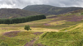 Cairngorms Royalty Free Stock Photos