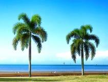 Cairns, deux palmiers le long de la plage images stock