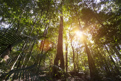 Cairns Rainforest. Cairns of rainforests in Australia royalty free stock photo