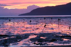 Cairns Sunrise Royalty Free Stock Image