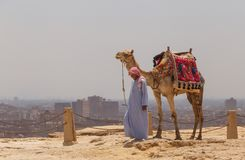 CAIRO, EGYPT - MAY 22, 2017: Arab man with camel at Giza pyramid complex. In Cairo royalty free stock image